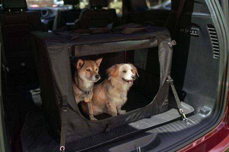 Chrysler Pacifica Jeep Wrangler migliori auto per amanti cani