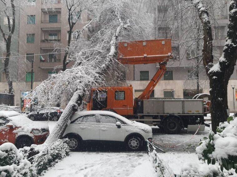 albero auto danni