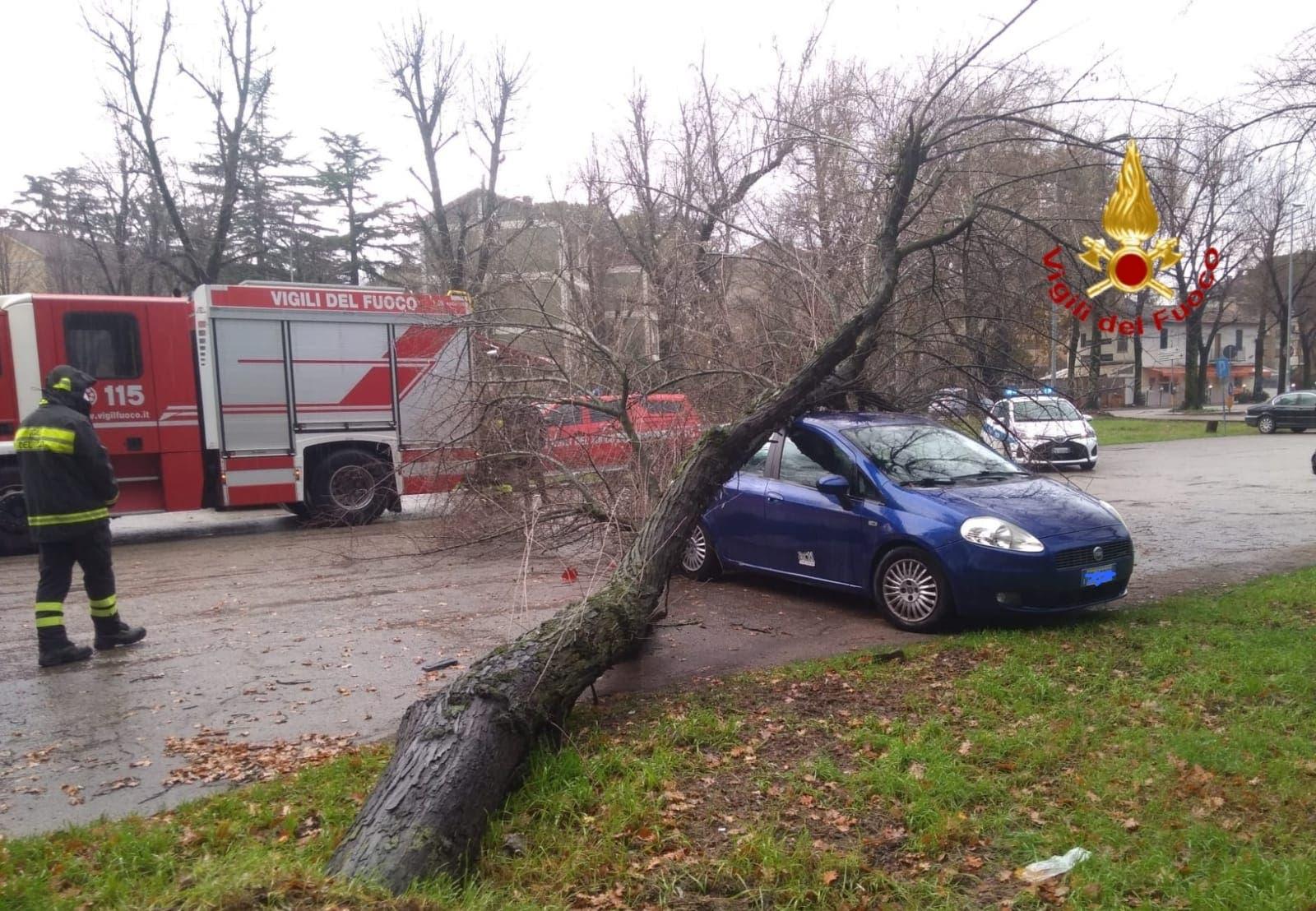 albero auto