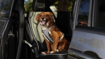 Chrysler Pacifica 2021 National Pet Day