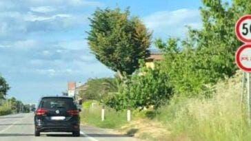 autovelox coperto dagli alberi 1