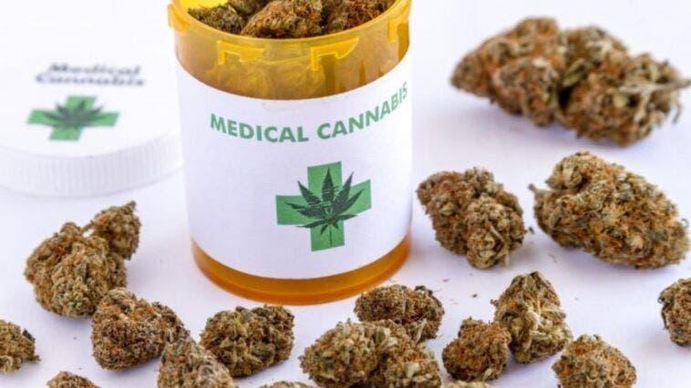 cannabis terapeutica e patente